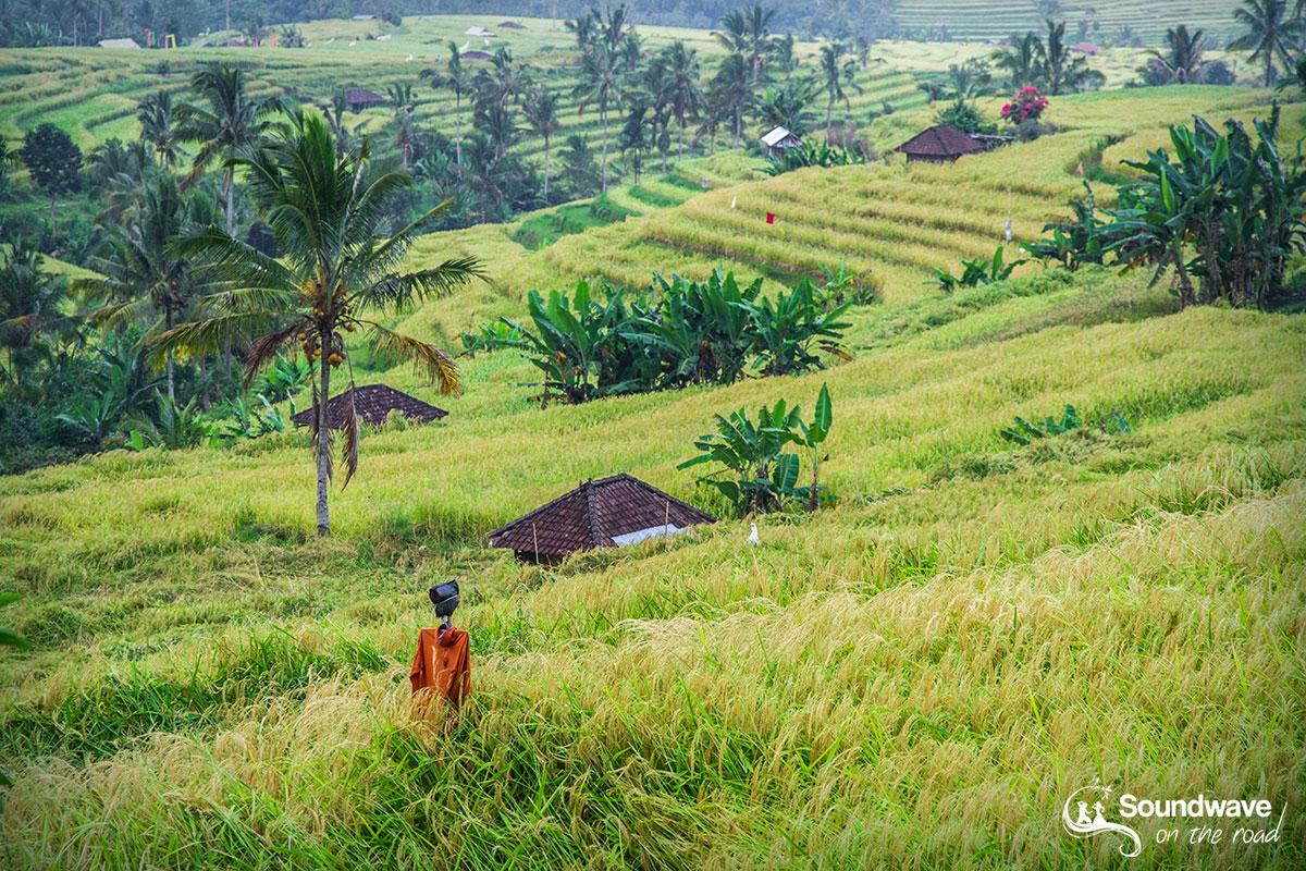Un épouvantail perdu dans les rizières de Jatiluwih