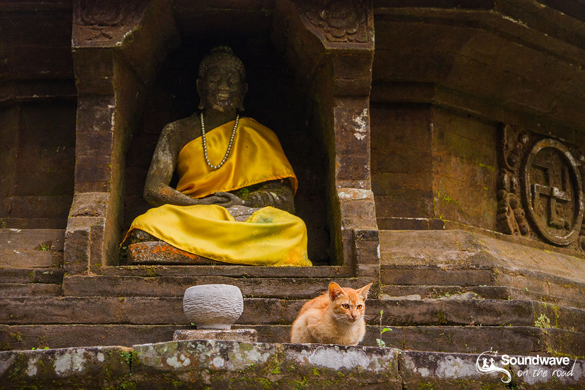 Cat and temple