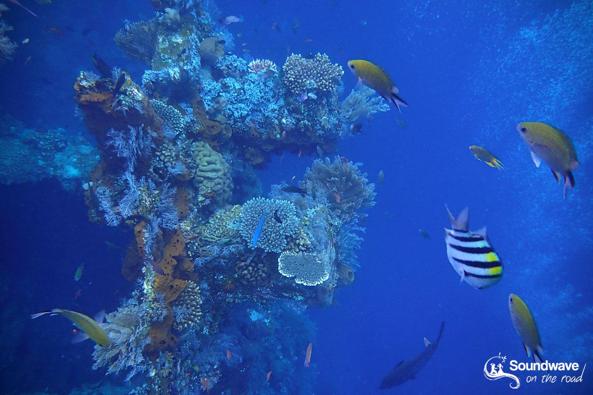 Snorkeling the USS Liberty Shipwreck, Tulamben, Bali