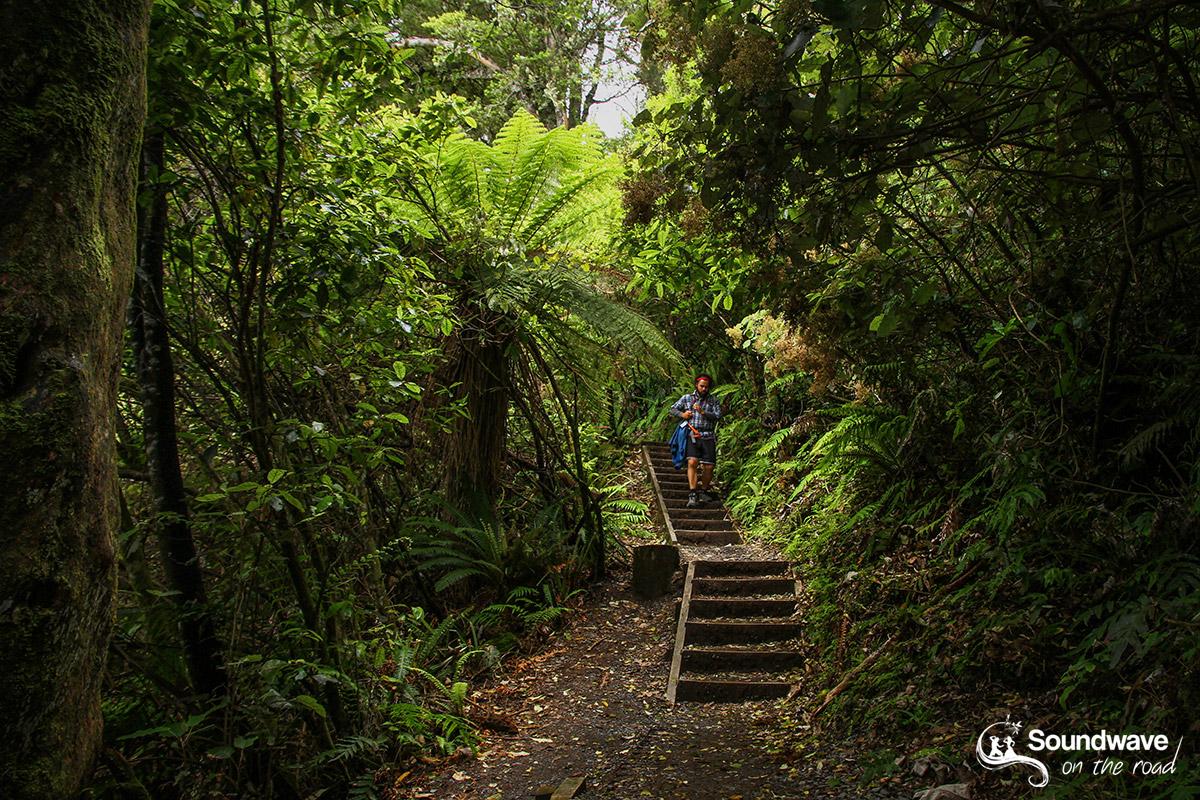 Tongariro Forest