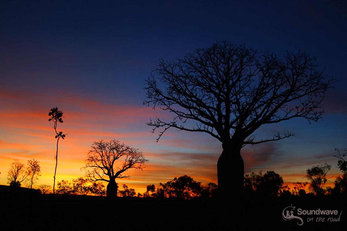 Coucher de soleil et baobabs en Australie