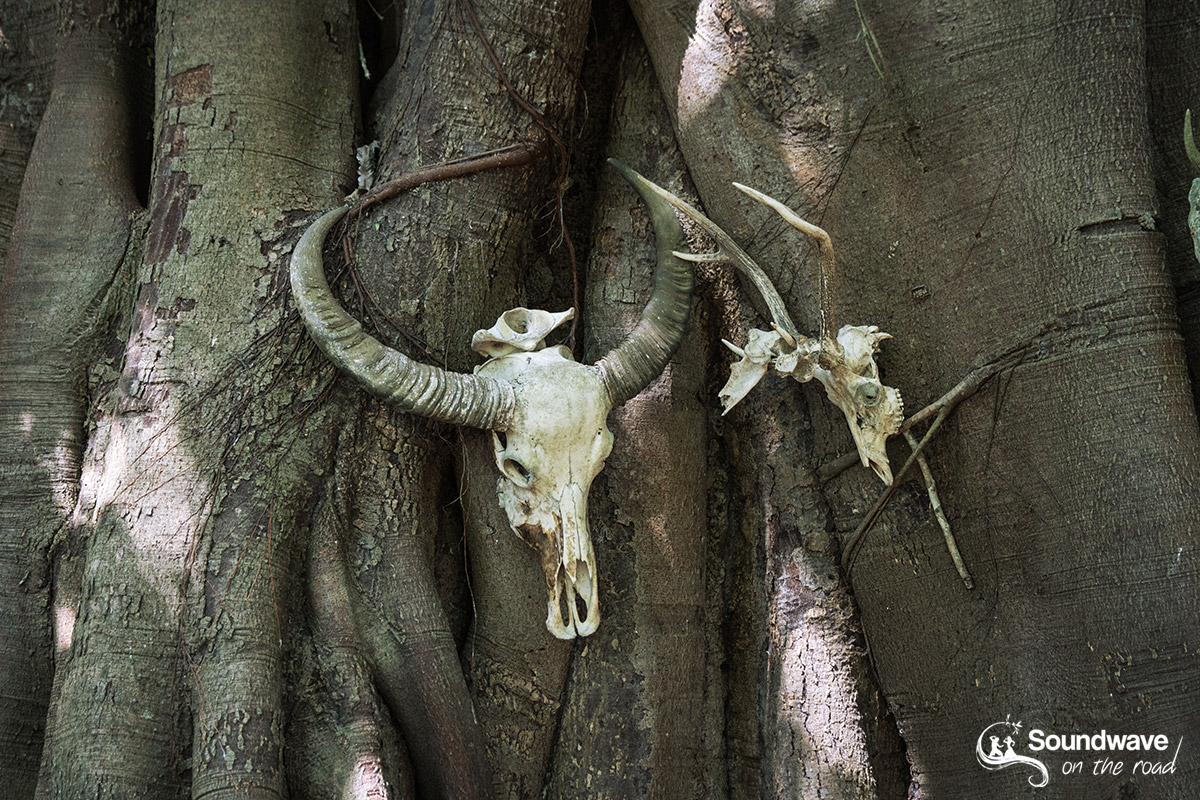 Visiter le parc national de Komodo