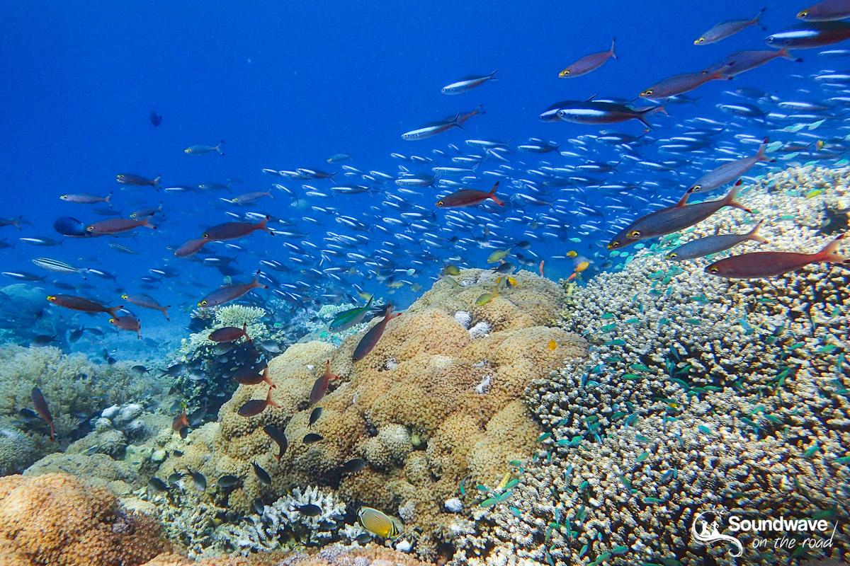Snorkeling à Satonda Island en Indonésie - Croisière de Lombok à Flores avec Kencana