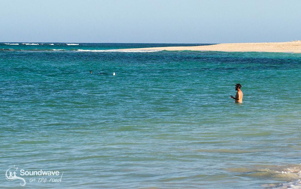 Raie manta à Gnaraloo Bay - Ningaloo Reef