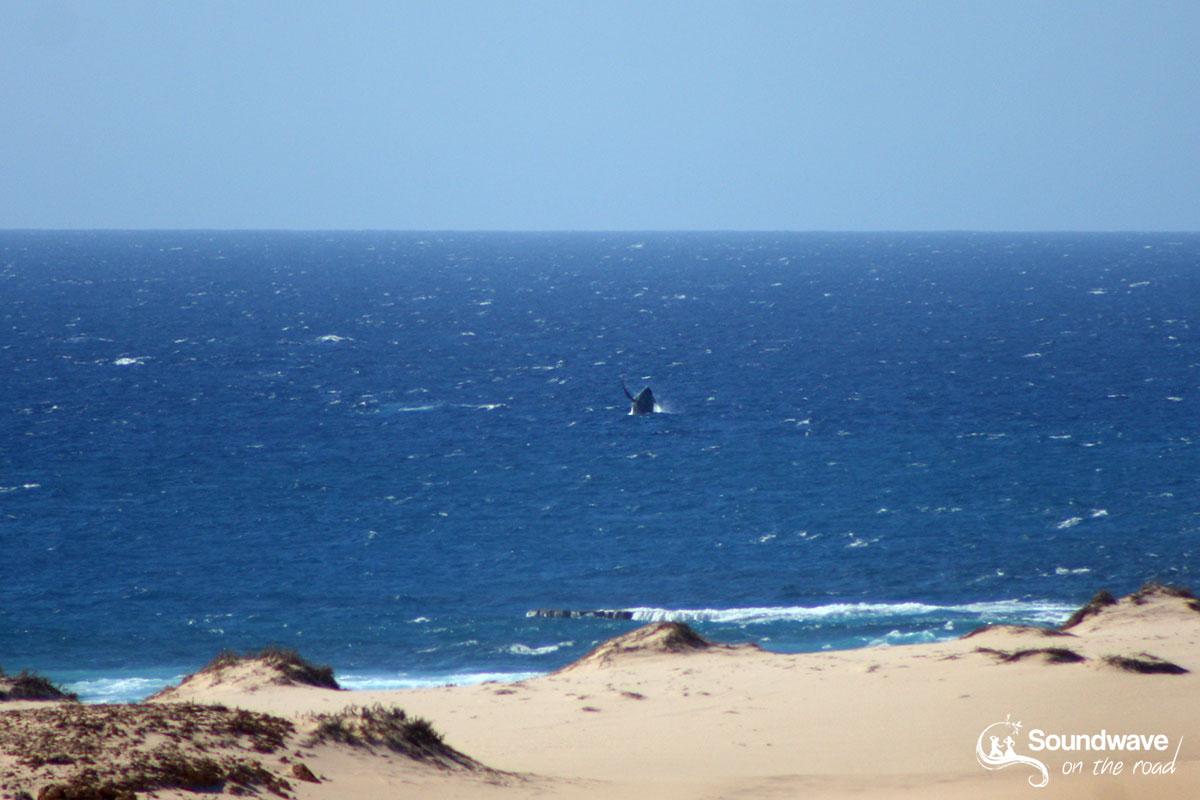Observer les baleines à bosse depuis Gnaraloo sur la Ningaloo Reef