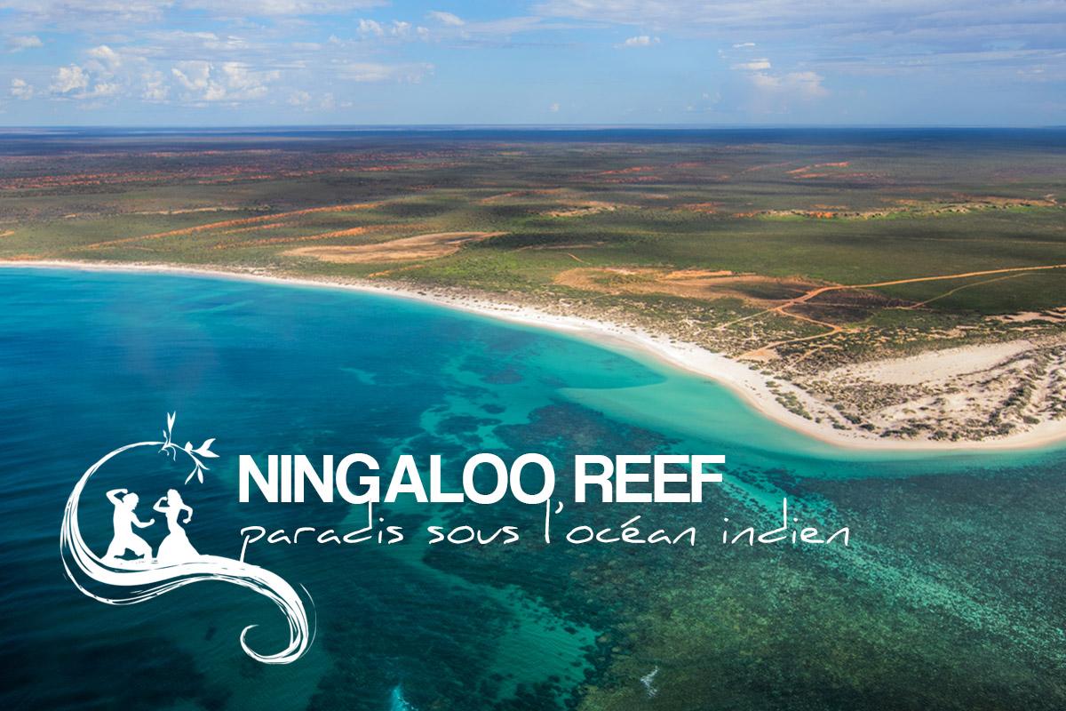 la ningaloo reef paradis lointain de l 39 oc an indien soundwave on the road blog de voyages. Black Bedroom Furniture Sets. Home Design Ideas