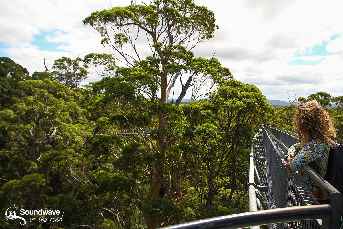 Tree Top Walk - Valley of the Giants - Western Australia