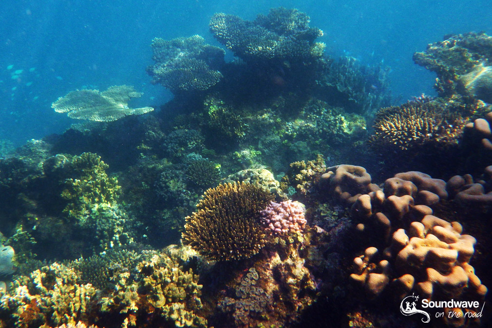 Corail sur la Ningaloo Reef