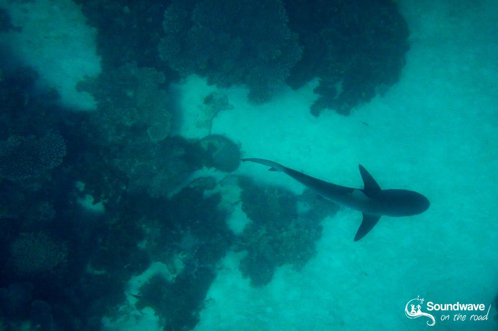 Nager avec les requins en Australie