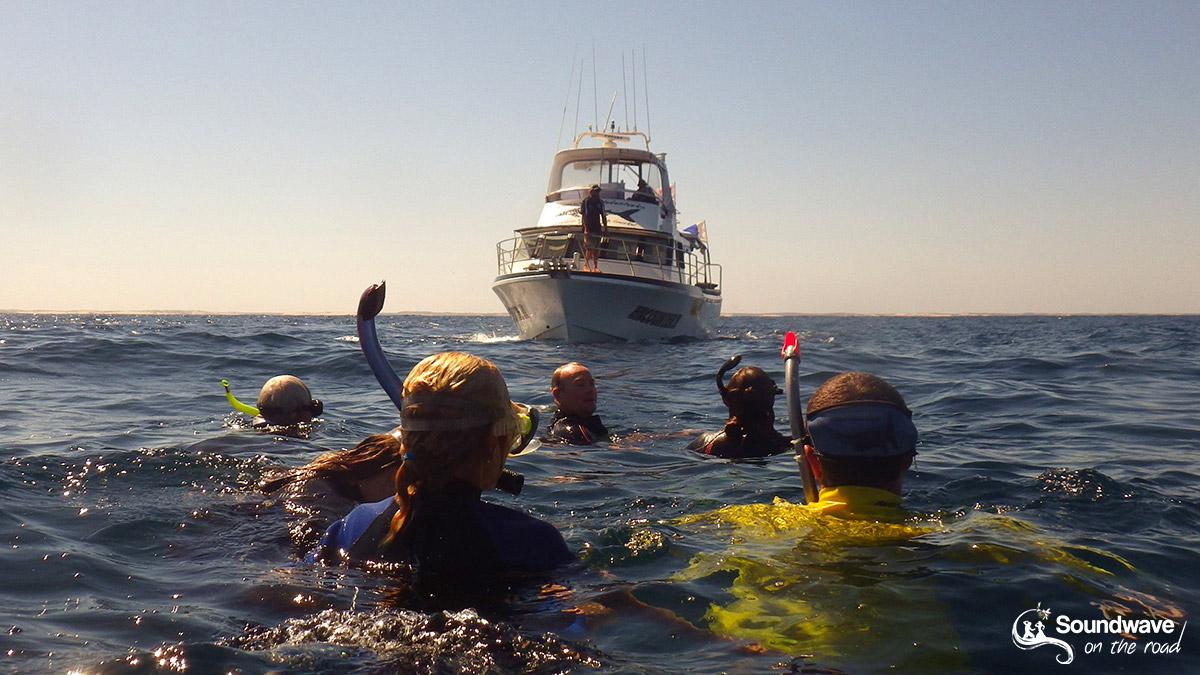 Où nager avec un requin baleine à Coral Bay ?