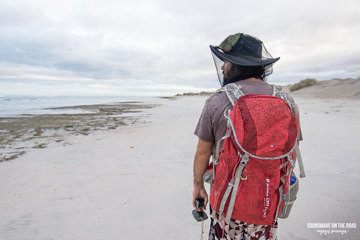 Vivre en harmonie avec les mouches en Australie