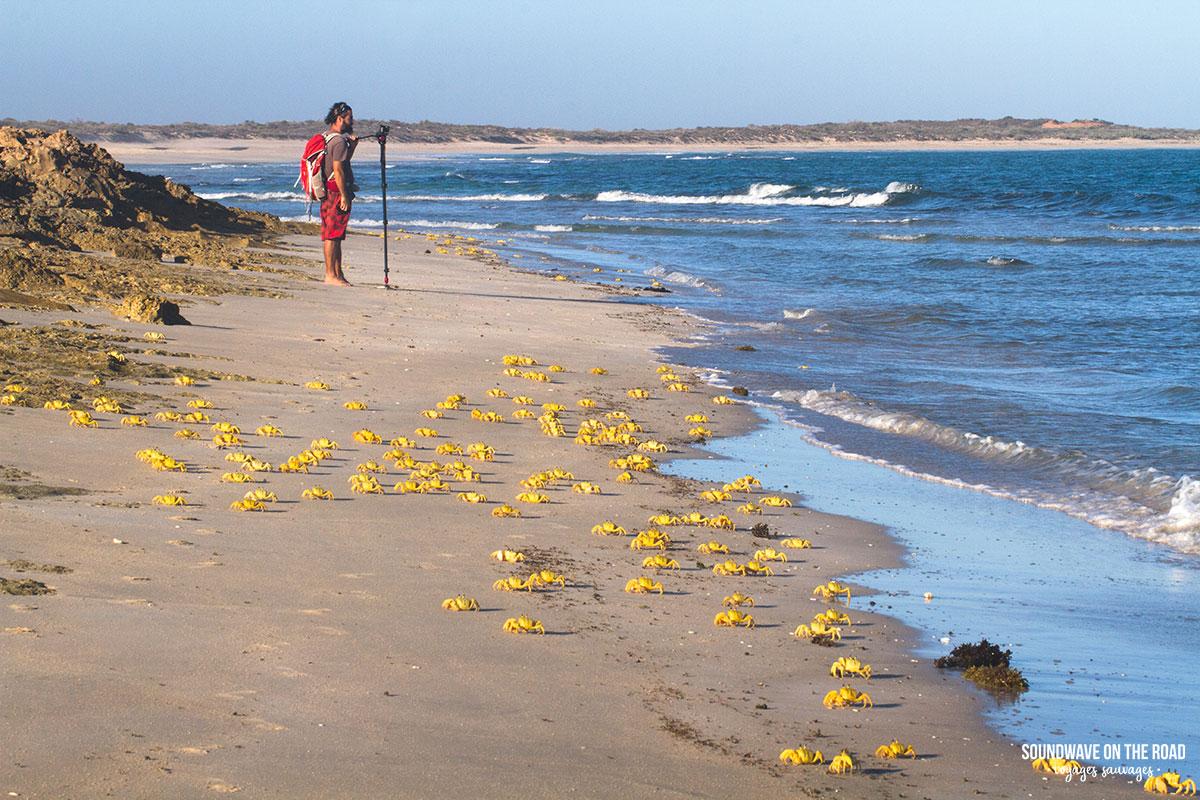 Gnaraloo Bay et ses crabes fantômes