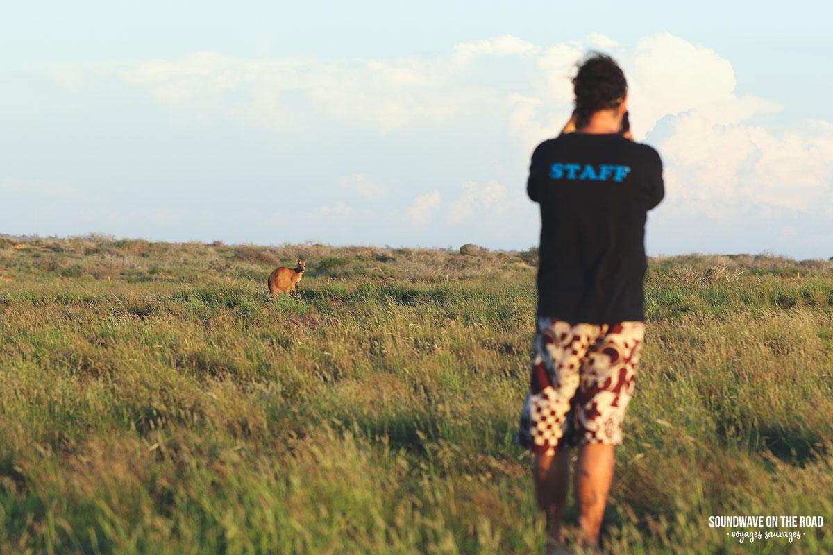 L'Australie, ce paradis pour photographier les animaux sauvages
