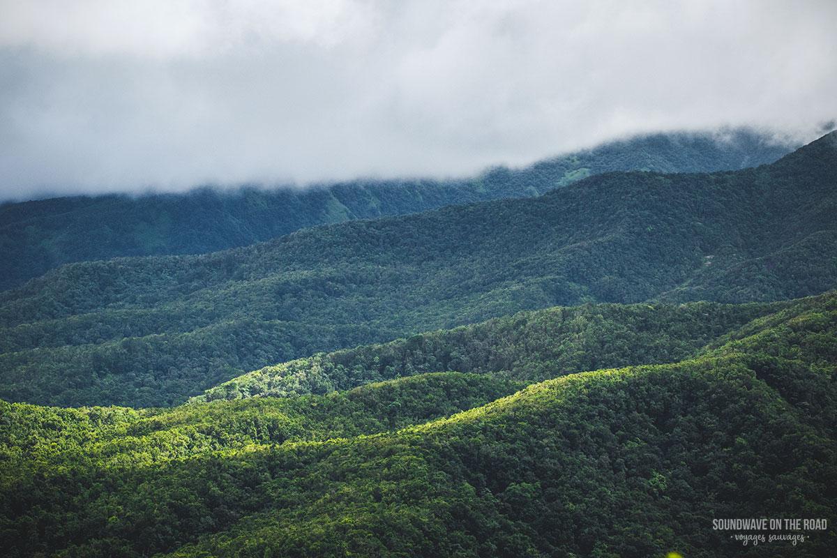 Vue sur la jungle en Guadeloupe