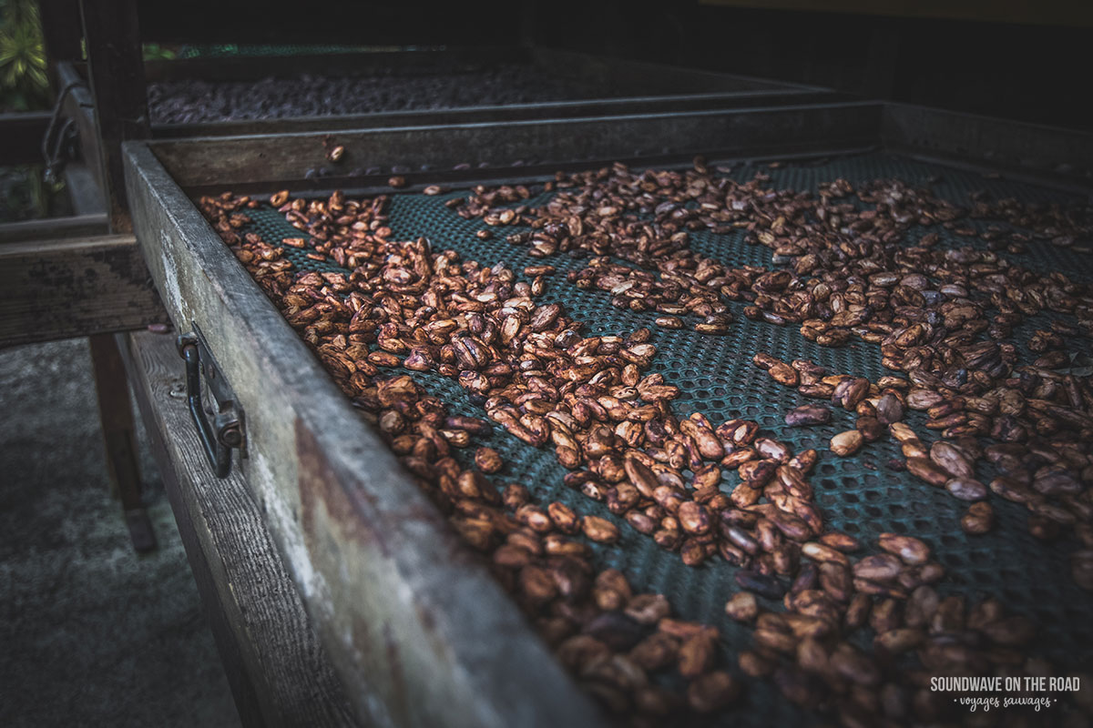 Cocoa beans - Guadeloupe