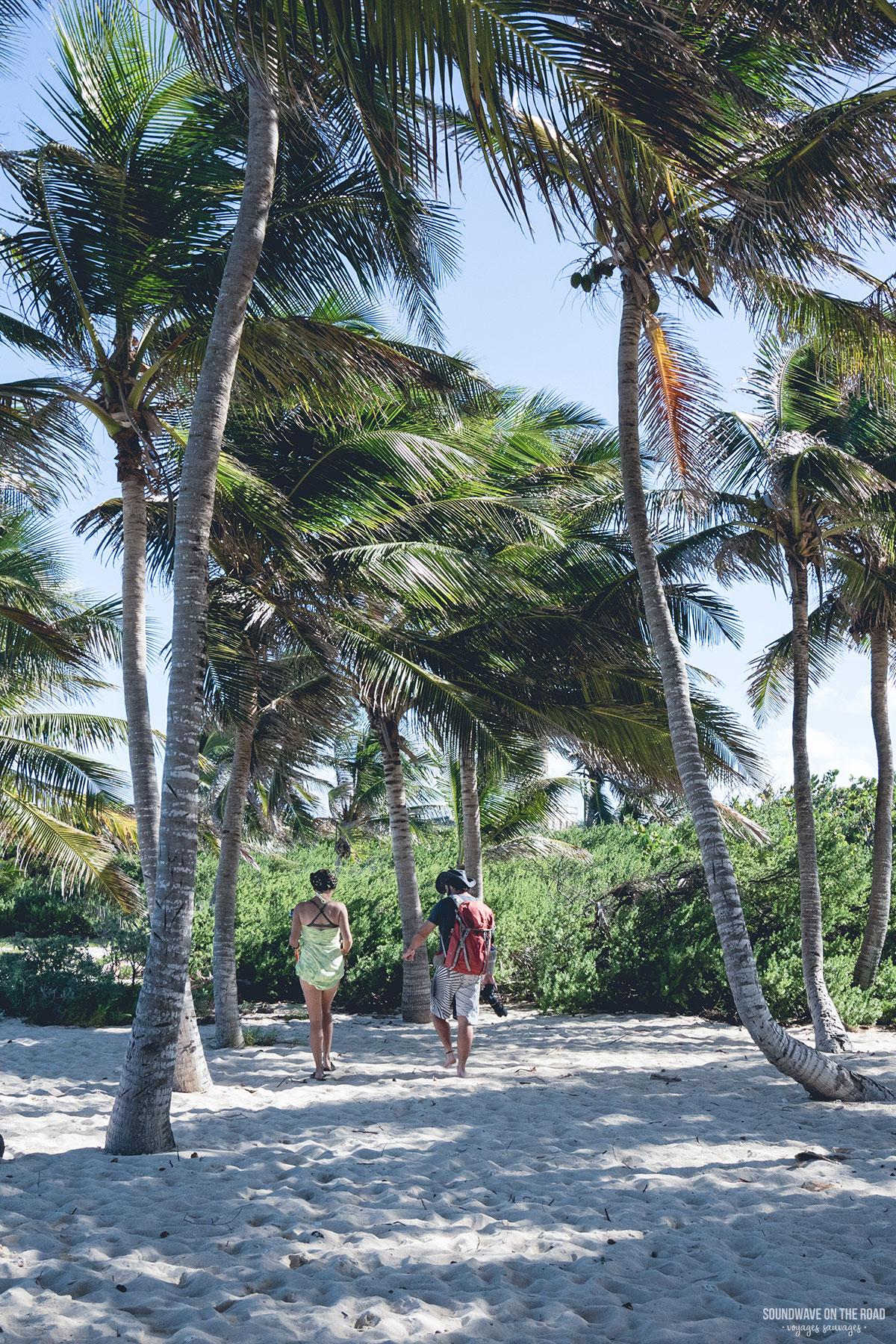 Les cocotiers à Petite Terre