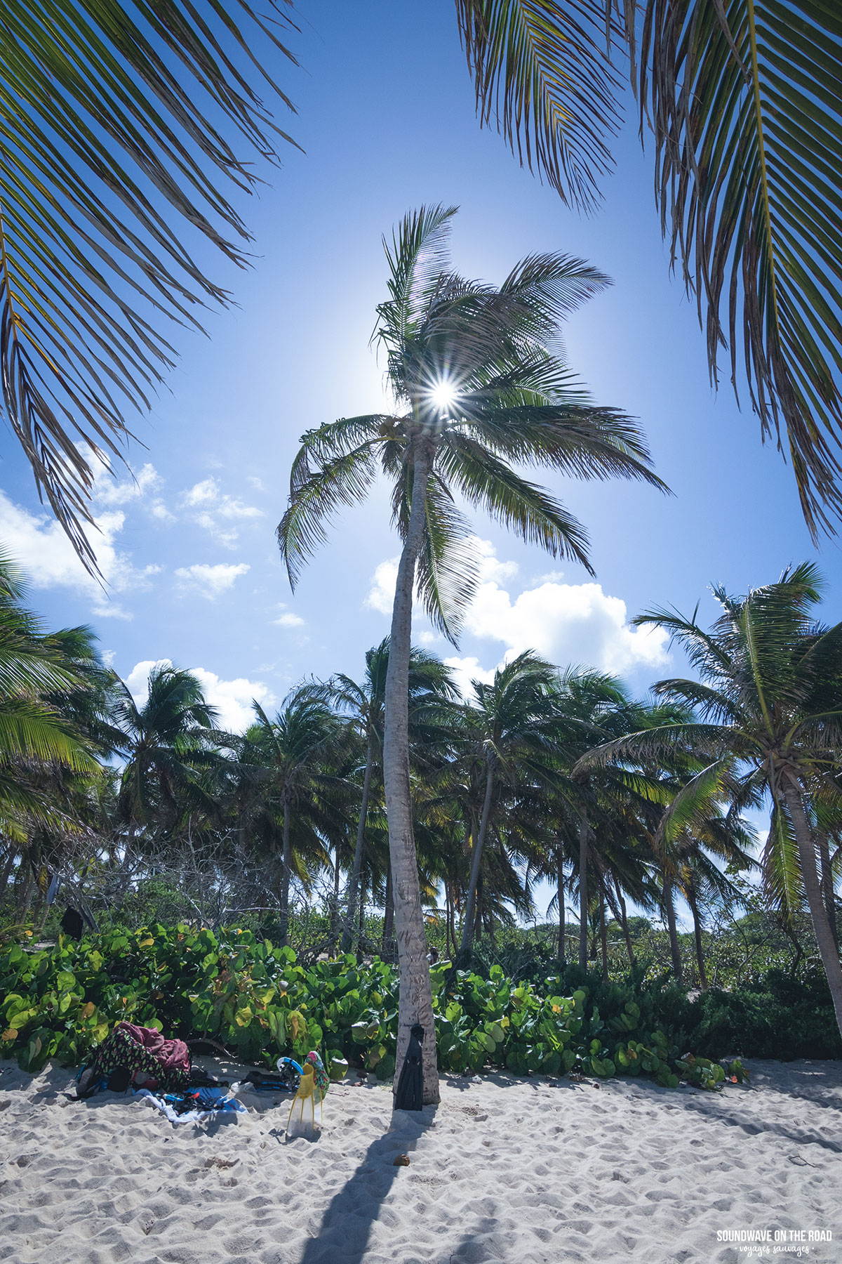 Sous les tropiques à Petite Terre