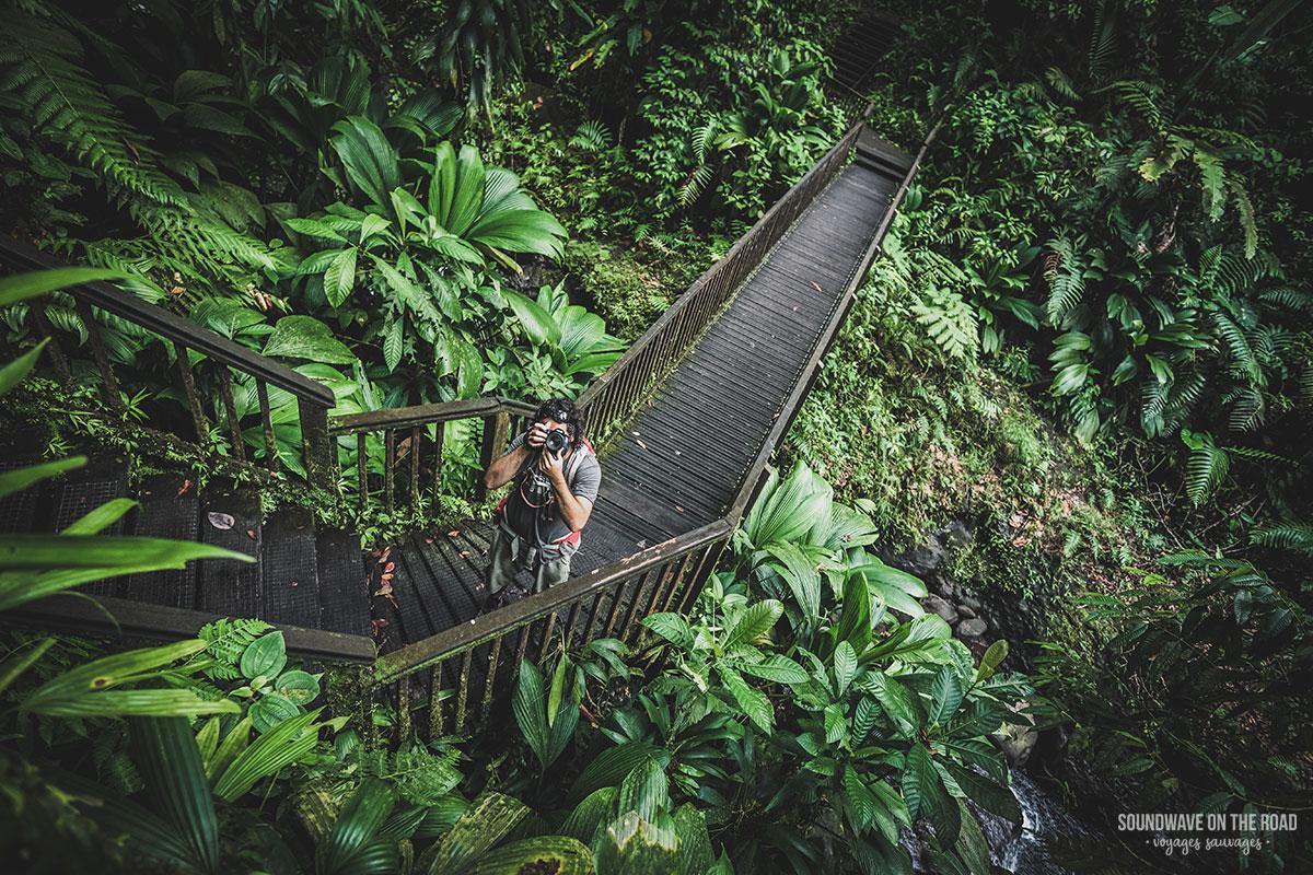 Randonnée dans la jungle guadeloupéénne