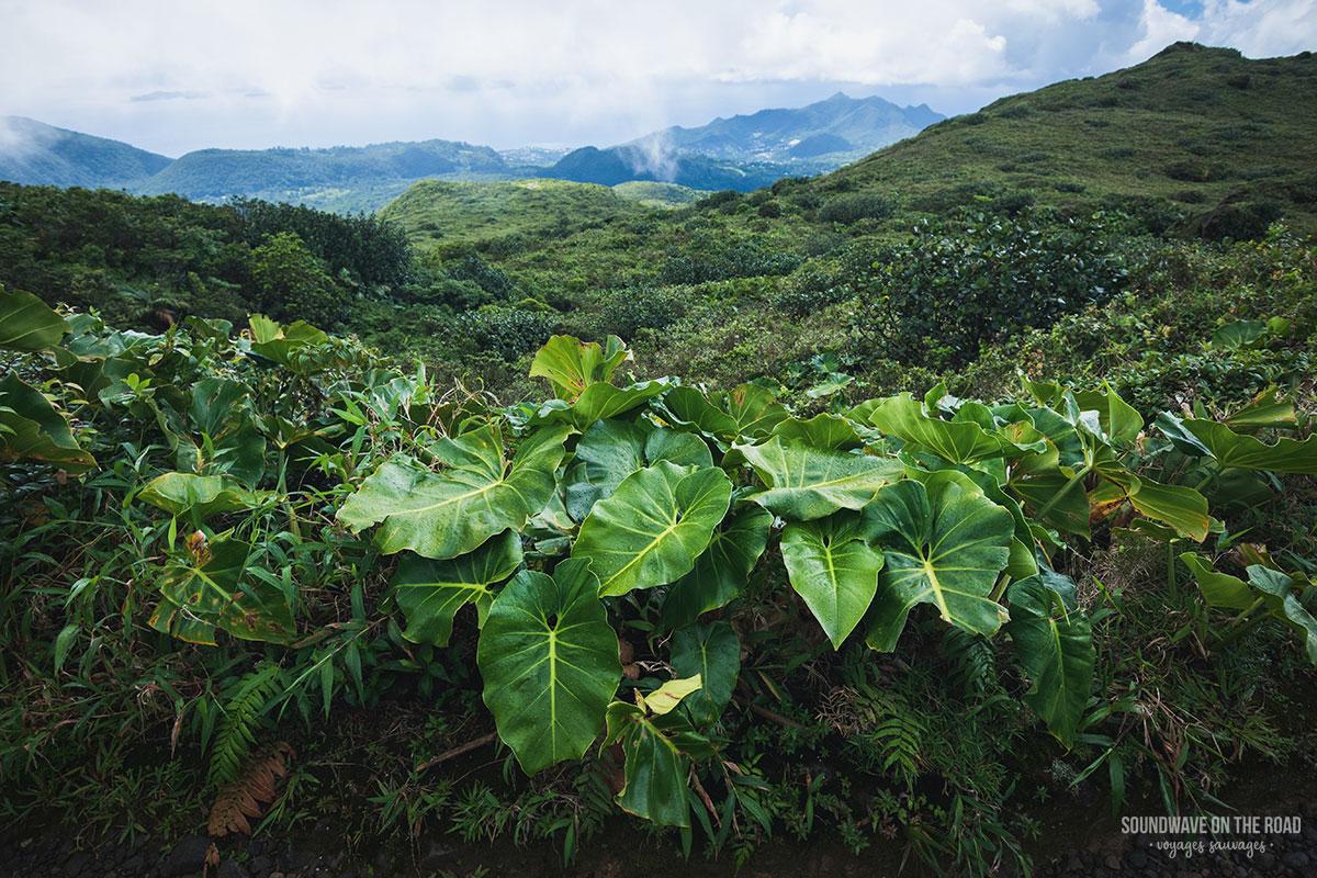 Randonnée sur le volcan de la Soufrière en Guadeloupe