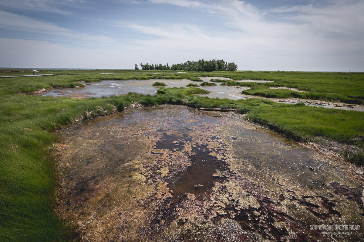Hay Island, péninsule Acadienne, Nouveau Brunswick, Canada