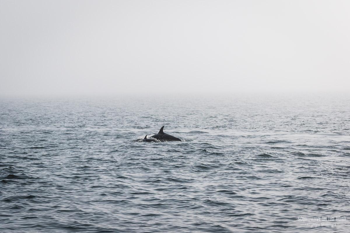 Observer les cétacés à l'île Grand Manan au Nouveau Brunswick