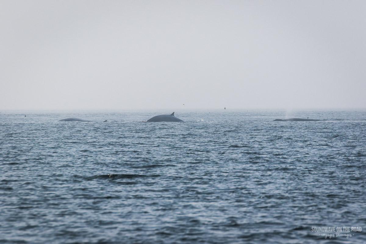 Voir des baleines sur l'île Grand Manan au Nouveau Brunswick