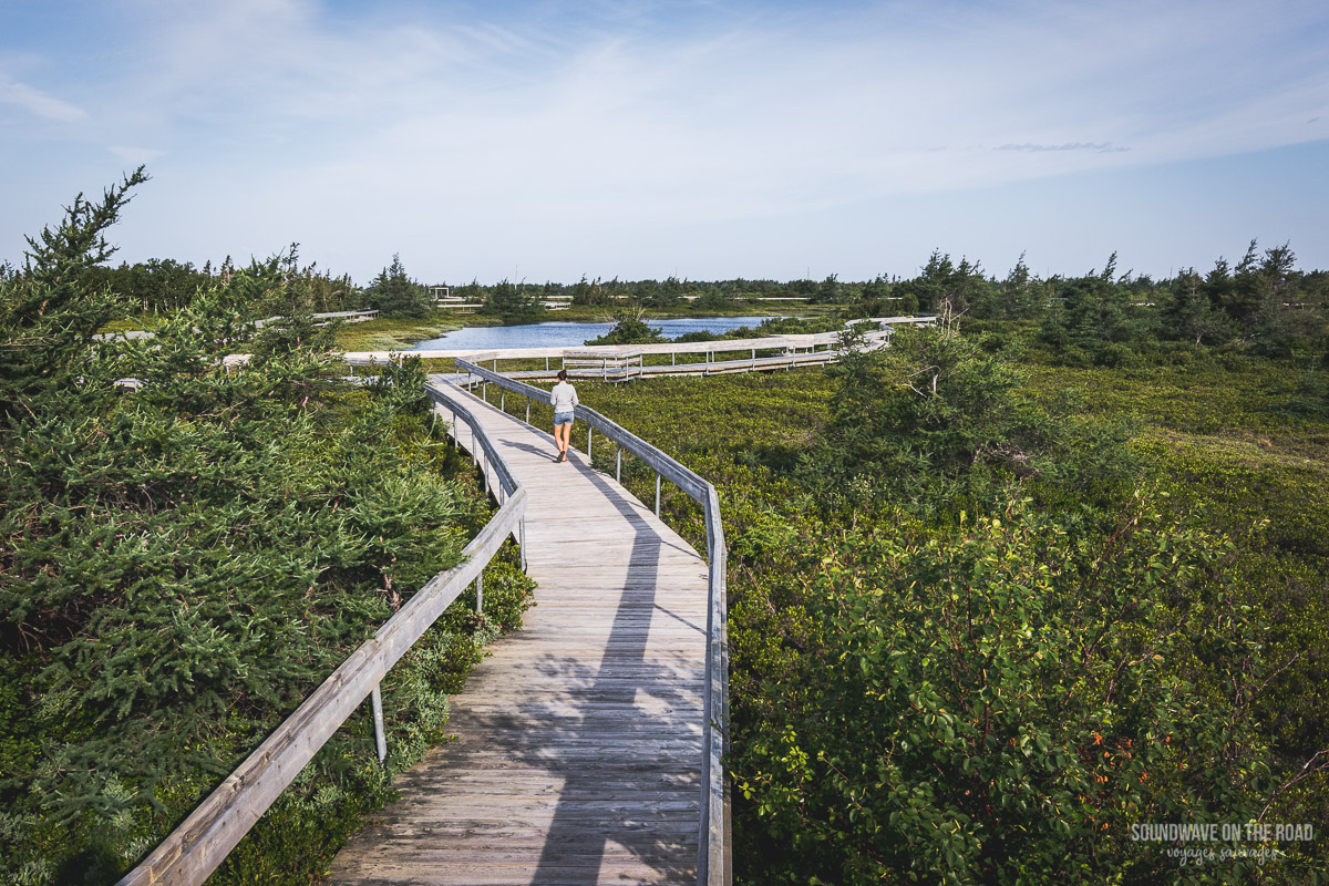 Tourbière, Île Miscou, péninsule Acadienne, Nouveau Brunswick, Canada