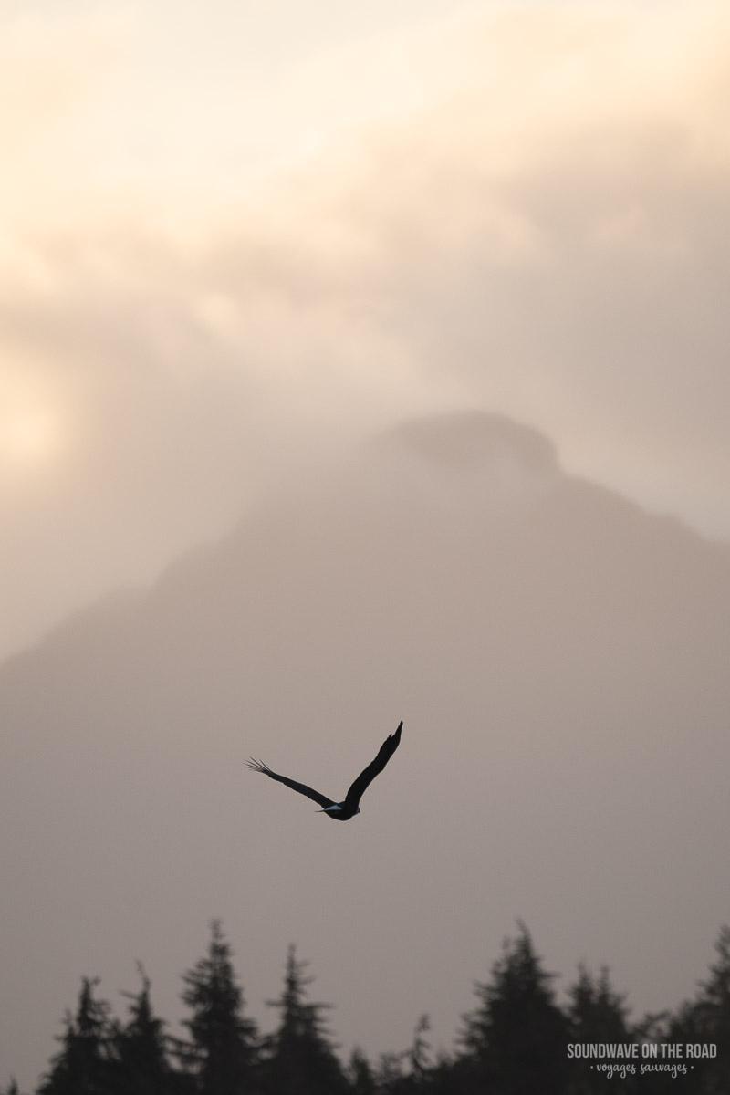 Un Pygargue S'envole Vers Les Montagnes