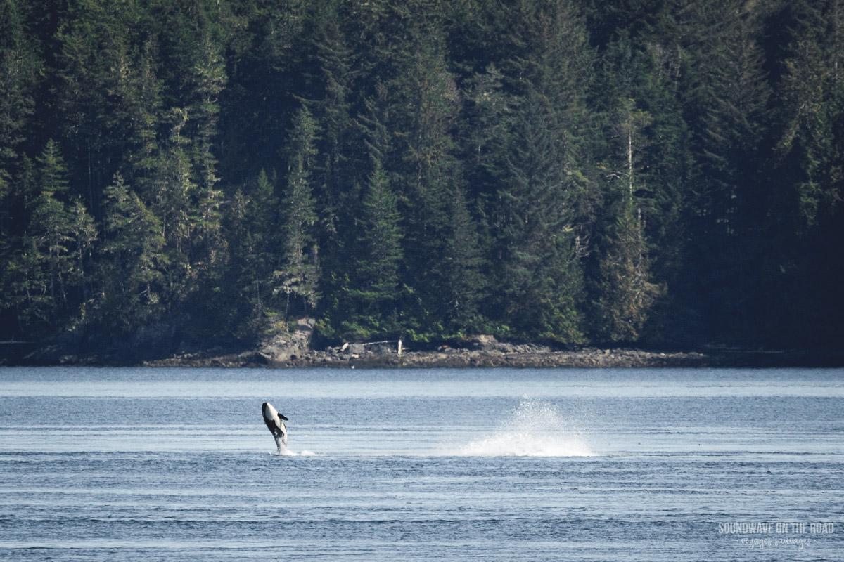 OrcaLab : étudier les orques sans les déranger
