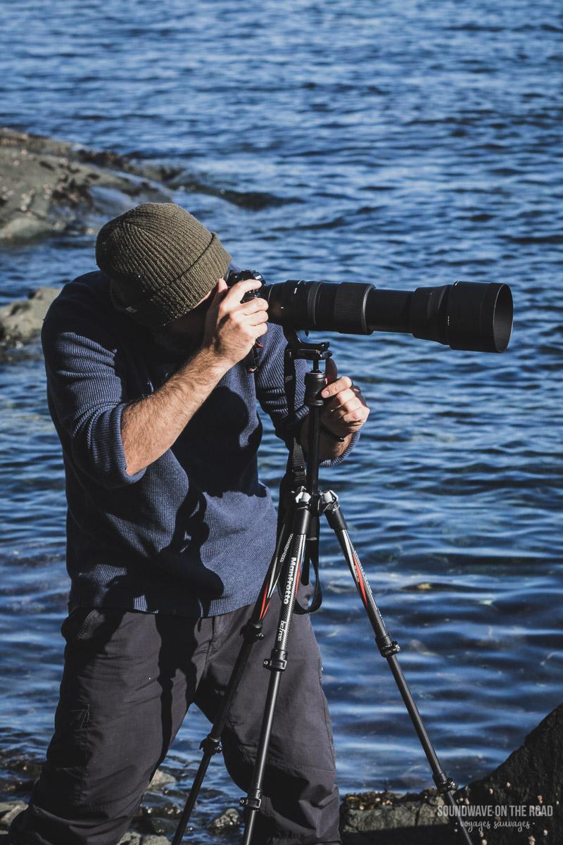 Photographier Les Orques Au Canada