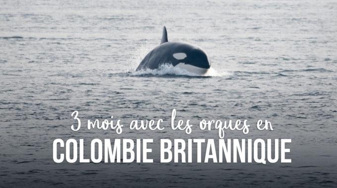 Trois Mois Avec Les Orques En Colombie Britannique