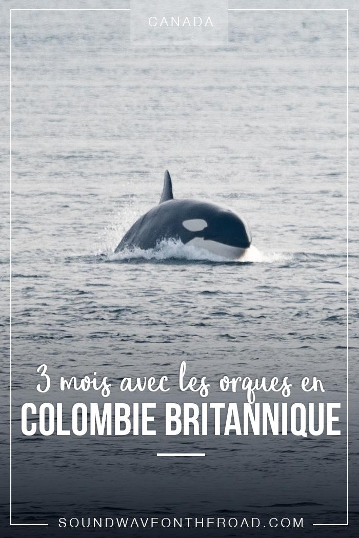 Trois mois avec les orques en Colombie Britannique dans l'ouest du Canada