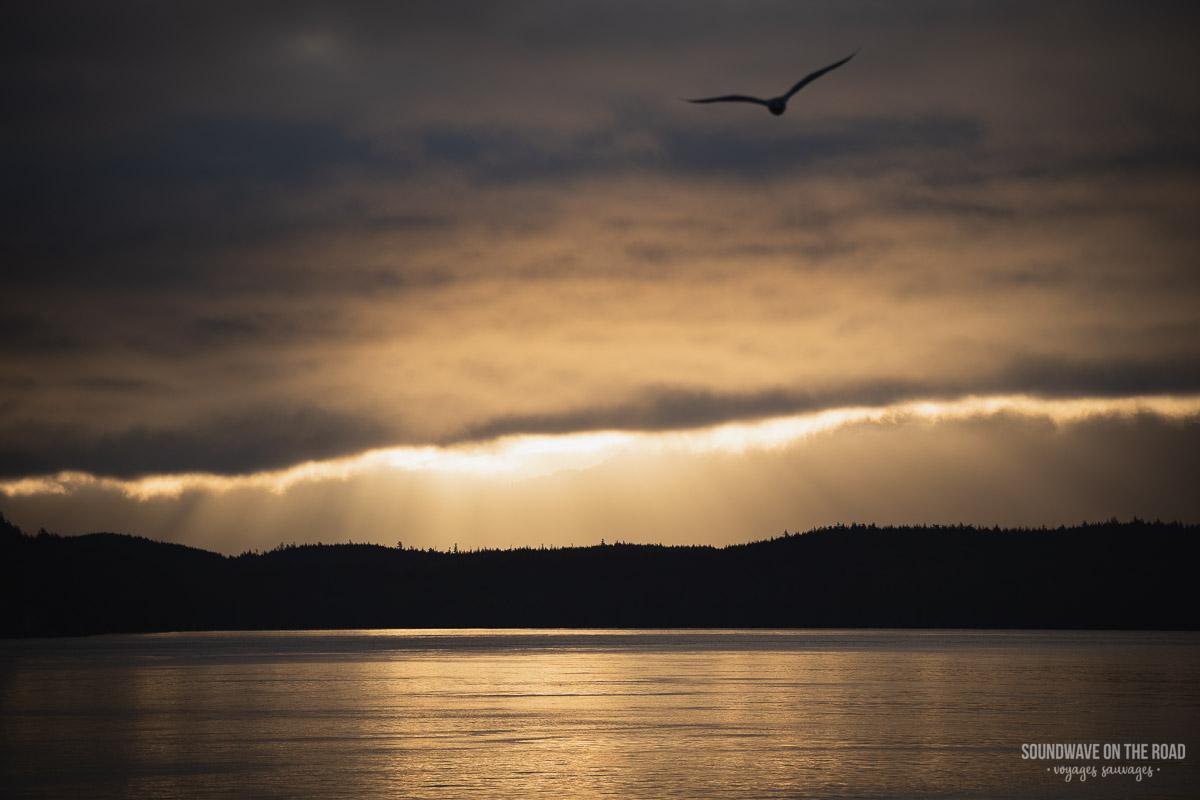 La magie du matin - Lever de soleil avec la silhouette d'une mouette