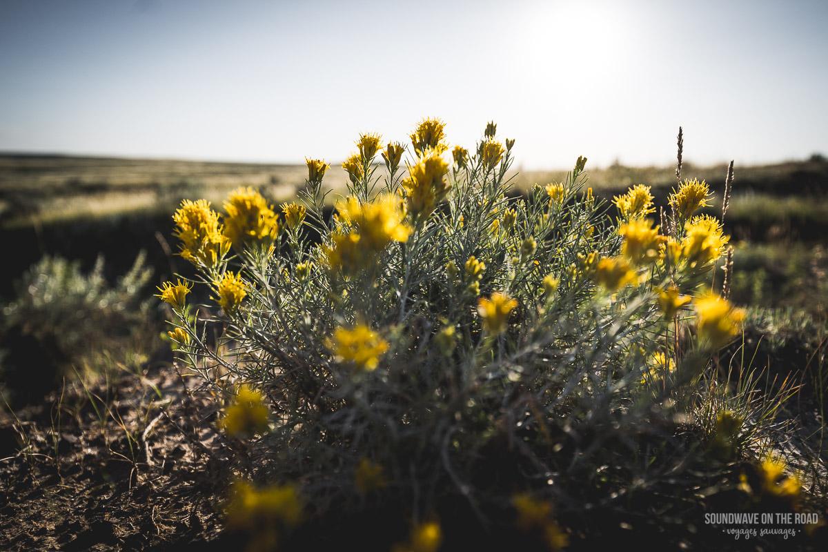 Wild flowers in the Grasslands